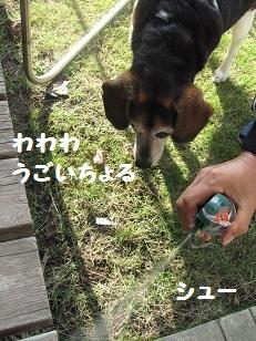 004_20111113192217.jpg