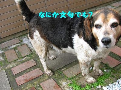 006_20110522092953.jpg
