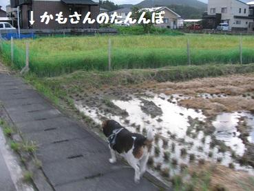006_20110804211457.jpg