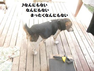 007_20110924101851.jpg