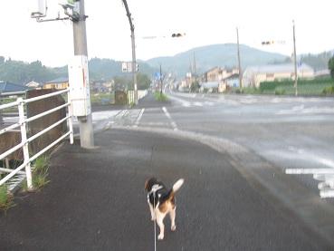 009_20111016125132.jpg