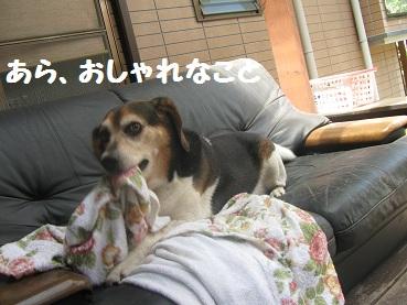 010_20110925214124.jpg