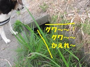 010_20130519084154.jpg