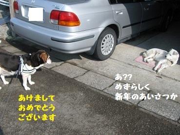 011_20120104203350.jpg