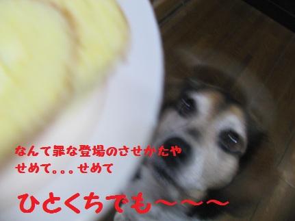 012_20111211211354.jpg