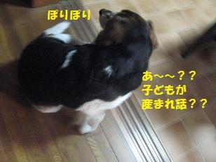 013_20130211111158.jpg