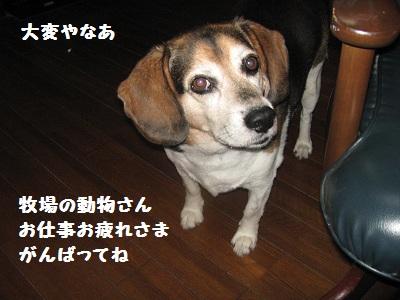 015_20111129213927.jpg