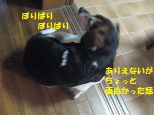 015_20130211111206.jpg