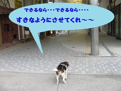 018_20110822220342.jpg