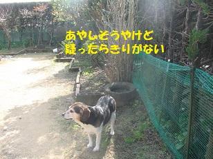 020_20130220221217.jpg