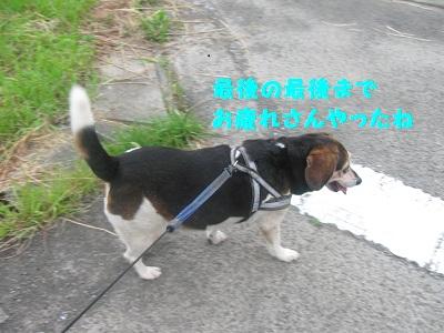 021_20110807200957.jpg