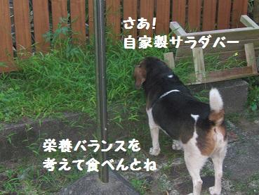 023_20110815203158.jpg