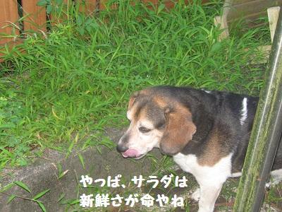 024_20110815203252.jpg