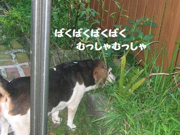 027_20110815203237.jpg