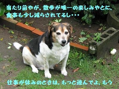 028_20110529194924.jpg