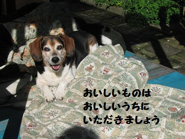 034_20111207205932.jpg