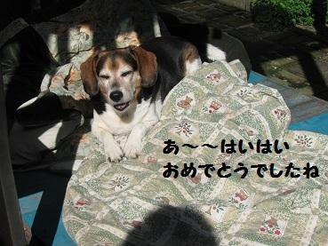 035_20111207205949.jpg