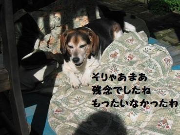 036_20111207210006.jpg