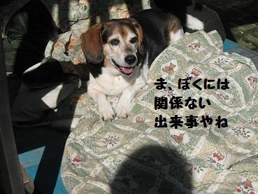 037_20111207210021.jpg