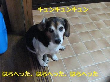 049_20120129171206.jpg