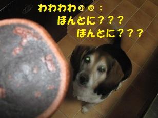 051_20130214222012.jpg