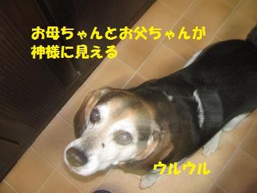 054_20130214222010.jpg