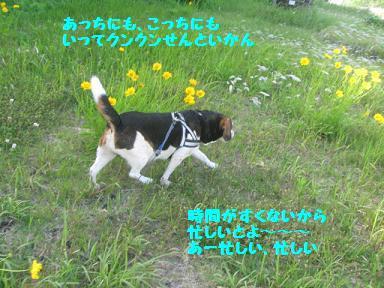 IMG_6225.jpg