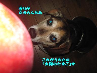 IMG_6244.jpg