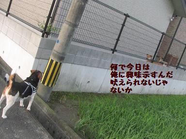 IMG_6310.jpg