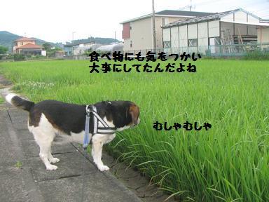 IMG_6363.jpg