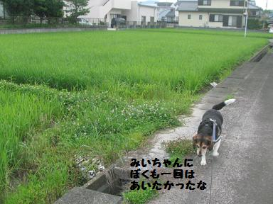 IMG_6367.jpg