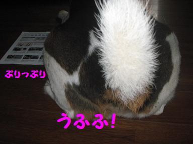 IMG_6591_20100704221904.jpg