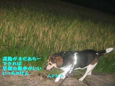 IMG_6720.jpg