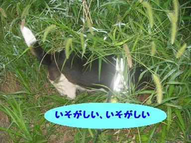 IMG_6790.jpg