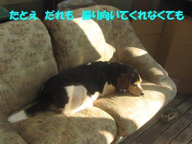 IMG_6932_20100830211810.jpg