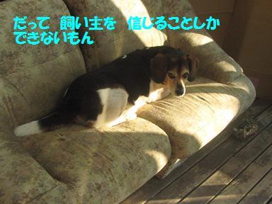 IMG_6933_20100830211704.jpg