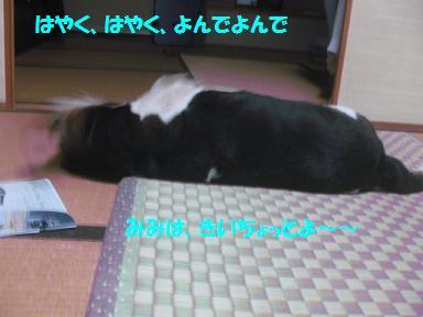 IMG_7038_20100909233526.jpg