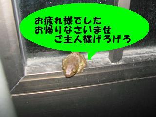IMG_7248_20101010083632.jpg