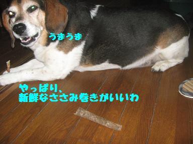 IMG_7548_20101219204116.jpg