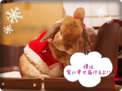 cookieblo1312255.jpg
