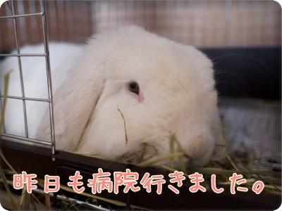 mashublo1401191.jpg