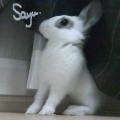 SayuOfficialPhotographer