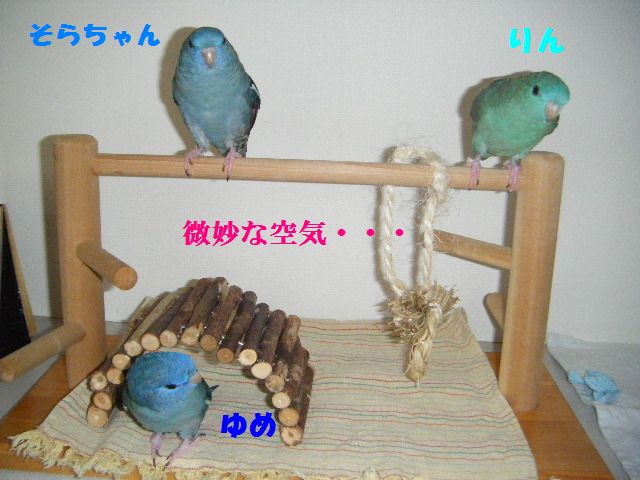 0241.jpg