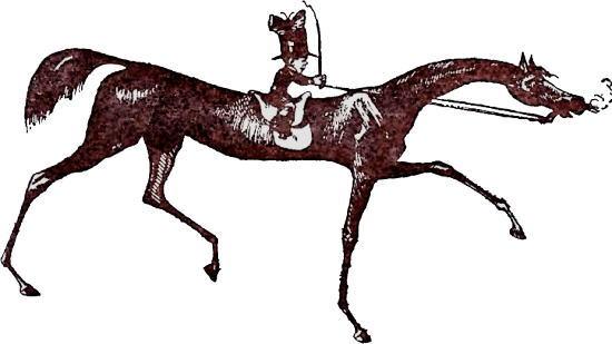 horse-550.jpg