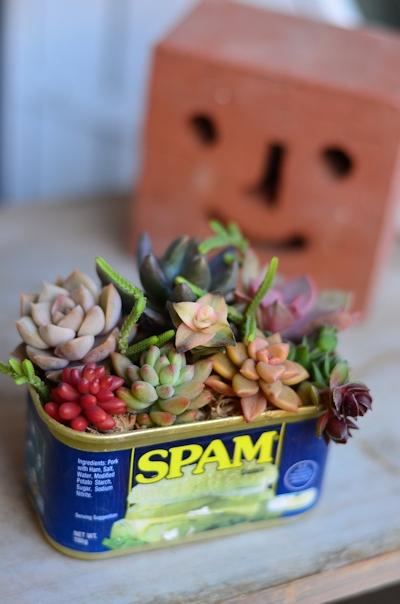 スパム缶ショートの寄せ植え20130224_02