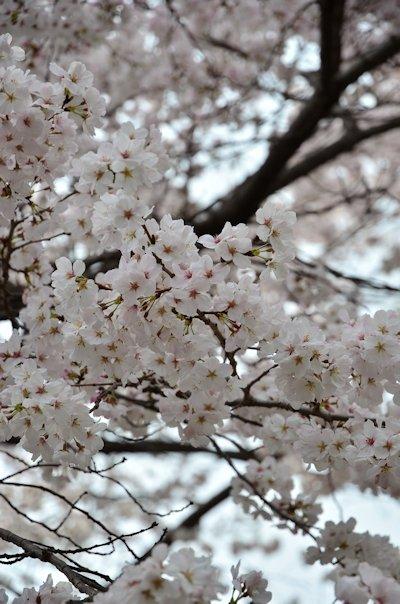 上野恩賜公園20130320