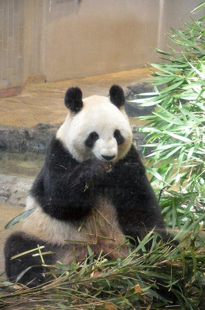 上野動物園シンシン20130320