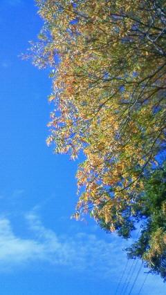 葉っぱと空