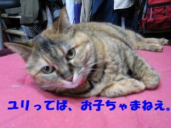 ブログ6・11