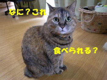 ブログ用6・18-2jpg